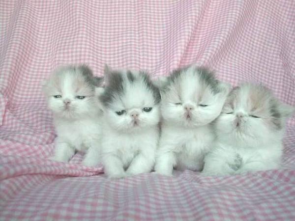 ...котенка и смотреть котят. кошки красивые фото. всего фото по теме...